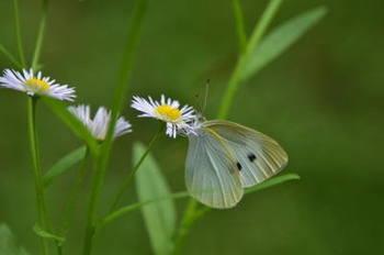 16蝶々.jpg